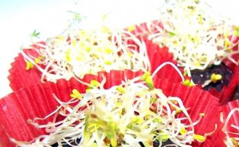 Крокети от цвекло с орехи, сос тахан, кис. мляко и кълнове